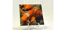 Custom Laminated Glass - A Fish
